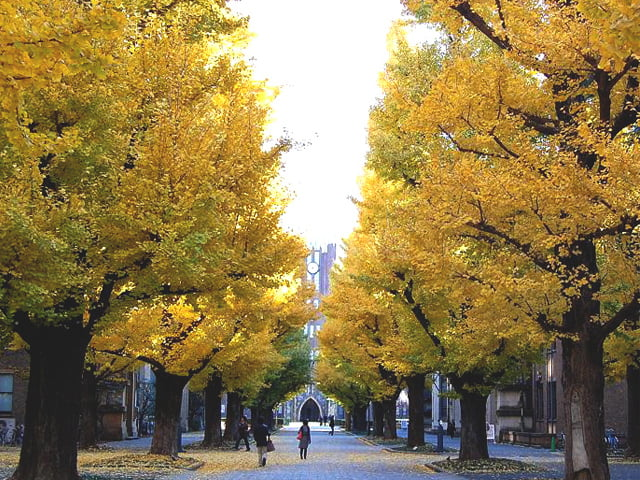 The University of Tokyo Graduate School of Public Policy